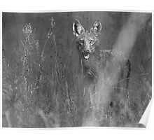 Coyote BW Poster