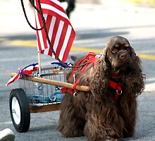 """Carrying The Flag - 4th of July Parade/""""Adopt A Dog"""" by BarbL"""