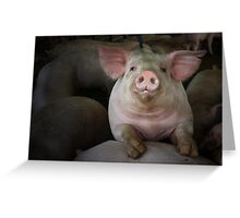 WHAT A HAM! Greeting Card