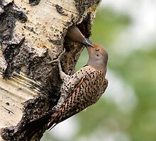 Flicker Breakfast On The Way, Gulping by A.M. Ruttle