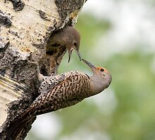Flicker Breakfast On The Way, Can Almost Taste It by A.M. Ruttle