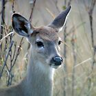 Little Doe by Donna Ridgway