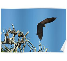 The Macabre in Flight Poster