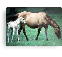 Mama and the Colt Metal Print