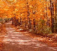 Orange Country Road by NatureGreeting Cards ©ccwri