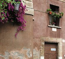 Italy - Flowers in window box with beautiful vine by creativetravler