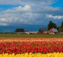 Red Barn Tulip Farm Sticker