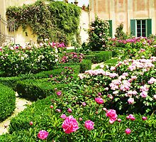 White and Pink Roses in a formal rose garden by creativetravler