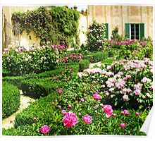 White and Pink Roses in a formal rose garden Poster
