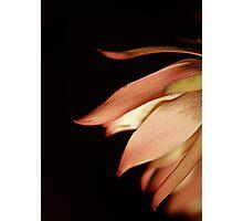macro marvel Photographic Print