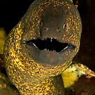 Yellow Edged Moray by MattTworkowski