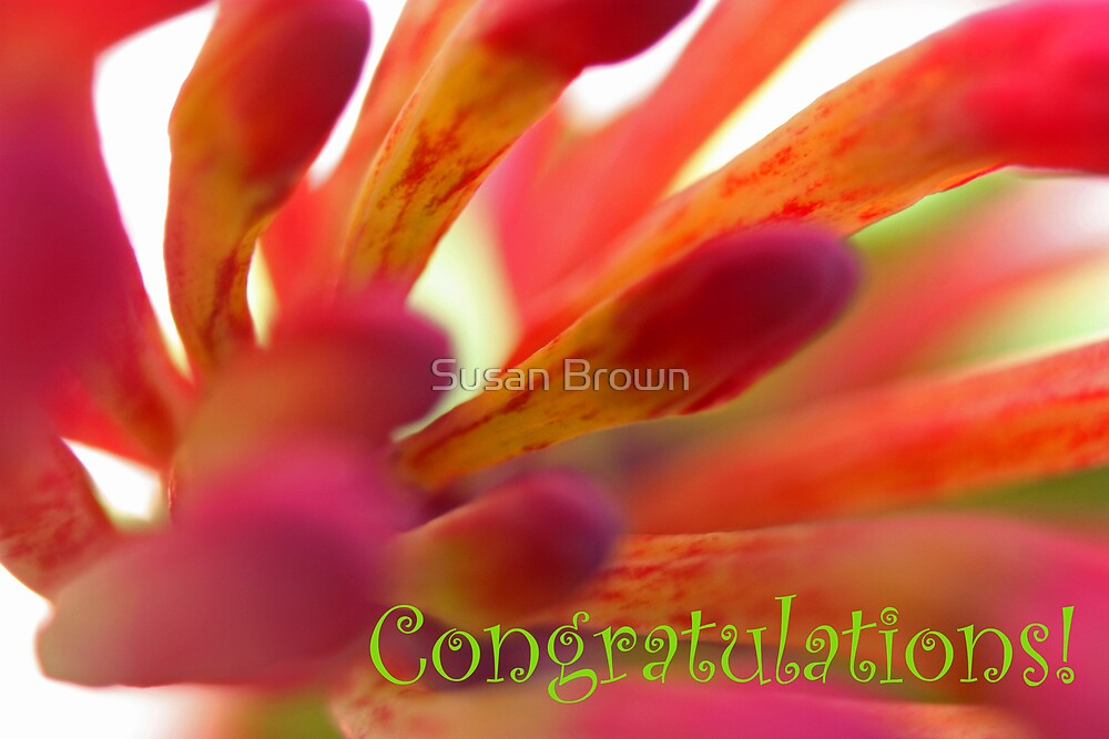 Congratulations - Firecracker Greetings Card by Susan Brown