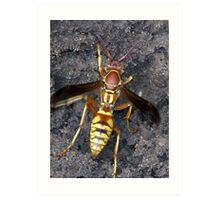 yellow  jacket wasp Art Print
