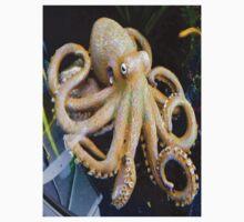 Octopus by LumixFZ28