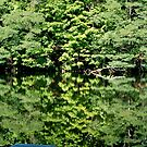 Summer Reflection  by Jeannette Sheehy