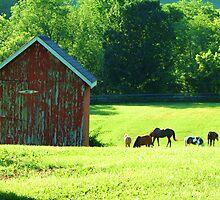 Pasture-ized Hobbit by LavenderMoon