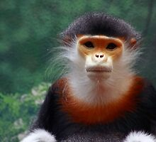 Primate Pose by itsmymoment