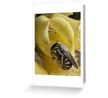 #468     Honey Bee Greeting Card