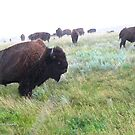 Raining Buffalo by Kay Kempton Raade
