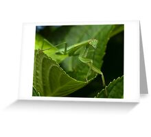 Hello Ms. Praying Mantis! Greeting Card