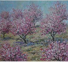 Apricot Trees Photographic Print
