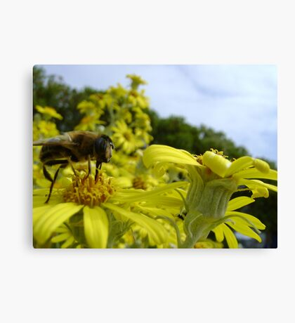 Bee's World - honeybee close-up, vista of flowers Canvas Print