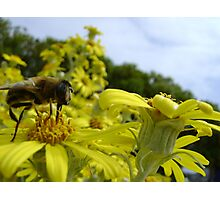Bee's World - honeybee close-up, vista of flowers Photographic Print