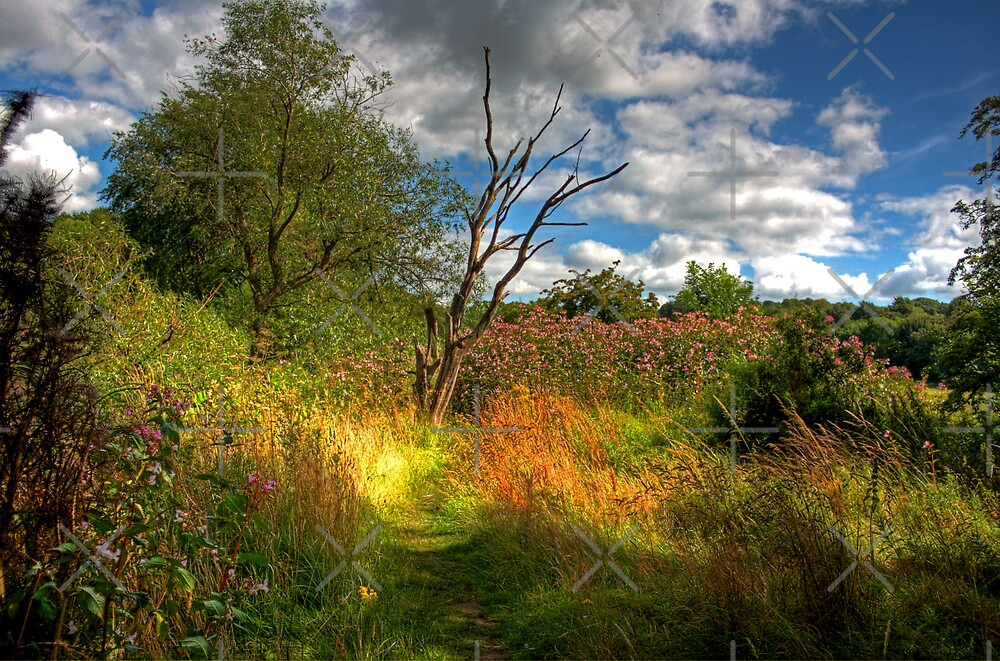 Along the River Avon Heritage Trail by Tom Gomez