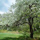 I Love Spring! by Rebecca Bryson
