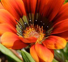 flower in my yard ... by BaZZuKa