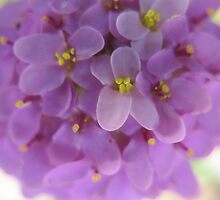 Giggling Mauves by MarianBendeth