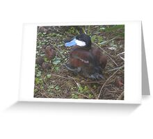 Blue Billed Duck Greeting Card