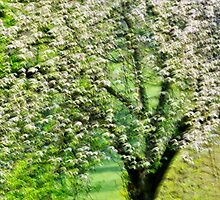 Springtime in white and green by Patrick Morand