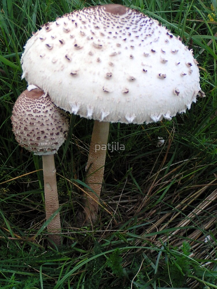 Mushroom child by patjila