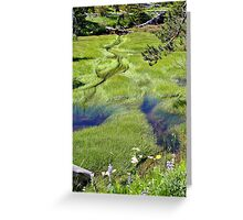 Green Delight Greeting Card