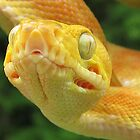 Amazing Amazon by Reptilefreak