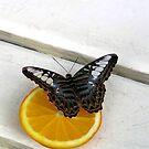 Butterfly by Dan Shiels