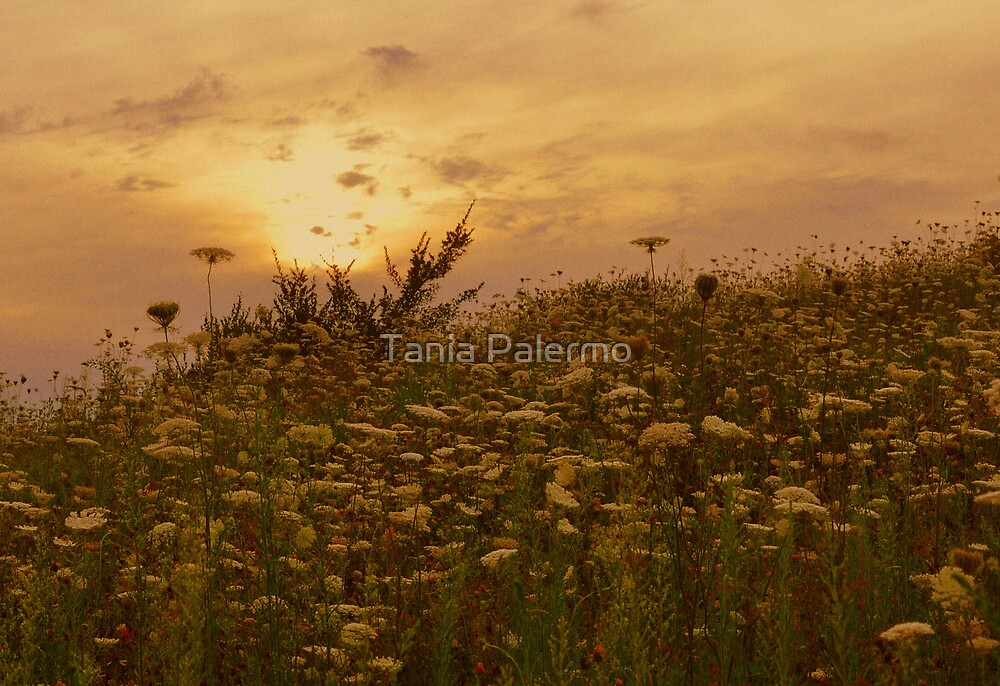 Come Away With Me by Tania Palermo