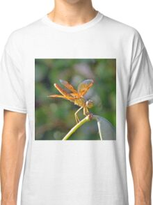 Resting Dragonfly  Classic T-Shirt