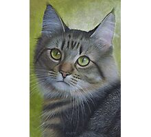 Portrait of a Tabby Photographic Print