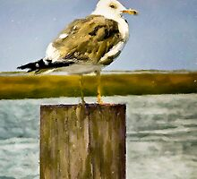 Seagull II  /  South Carolina by Shelley  Stockton Wynn