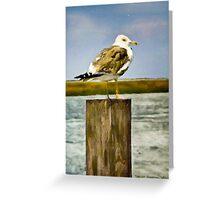Seagull II  /  South Carolina Greeting Card