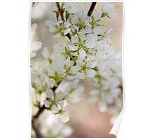 Found: Blossom Happy-ness Poster