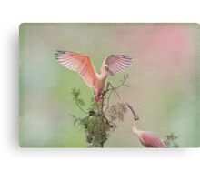Roseate Queen Canvas Print