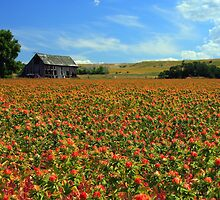 Field Of Color by Gene Praag