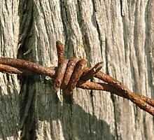 barbed wire on post by Michelle Fluri