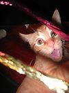 woah kitty! by schizomania