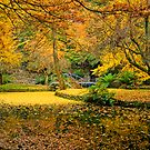 Golden autumn colours at Alfred Nicholas Gardens by Elana Bailey