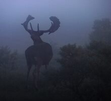 Fallow Deer into the sweet morning fog  by DutchLumix