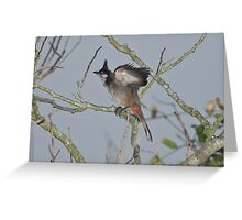 Fledgeling Red-Whiskered Bulbul Greeting Card